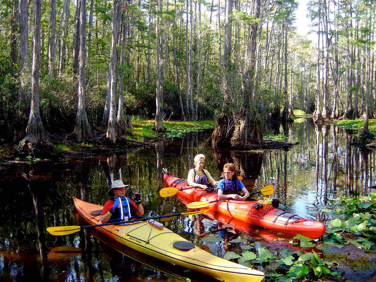 Discovering the Okefenokee Swamp and Cumberland Island