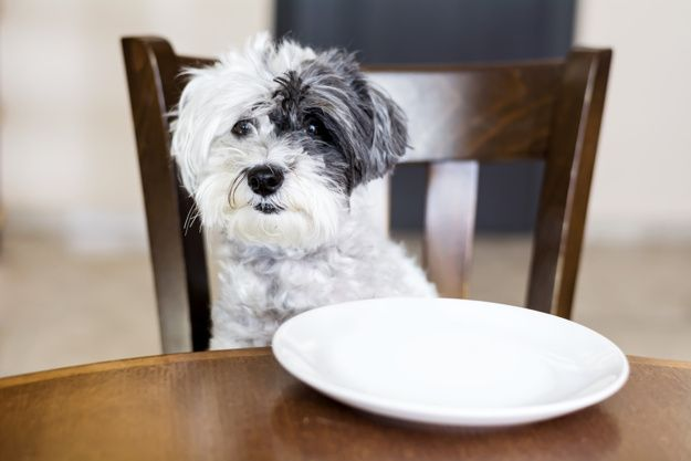 dogs-with-diarrhoea