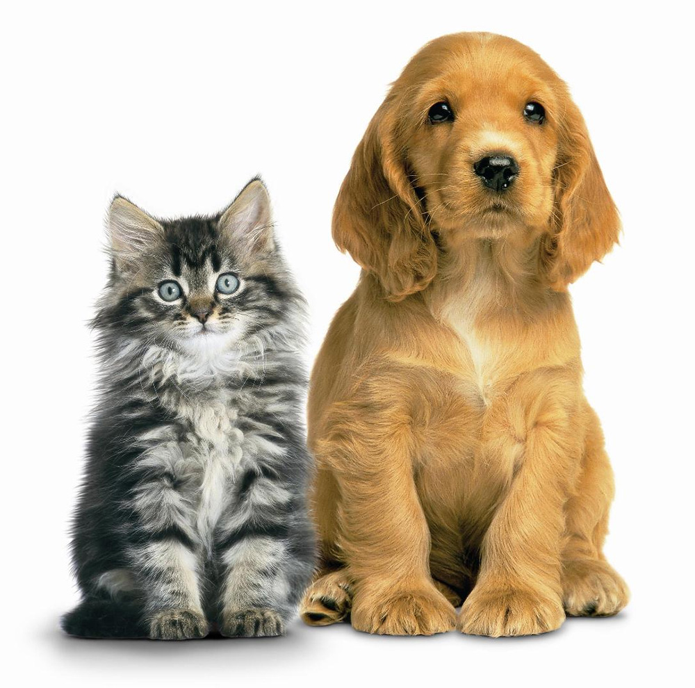 urinary-tract-supplements-for-cats