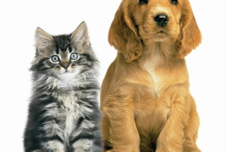 Cats Urinary Tract Supplements