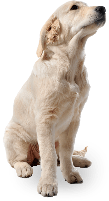 calming-pills-for-dogs