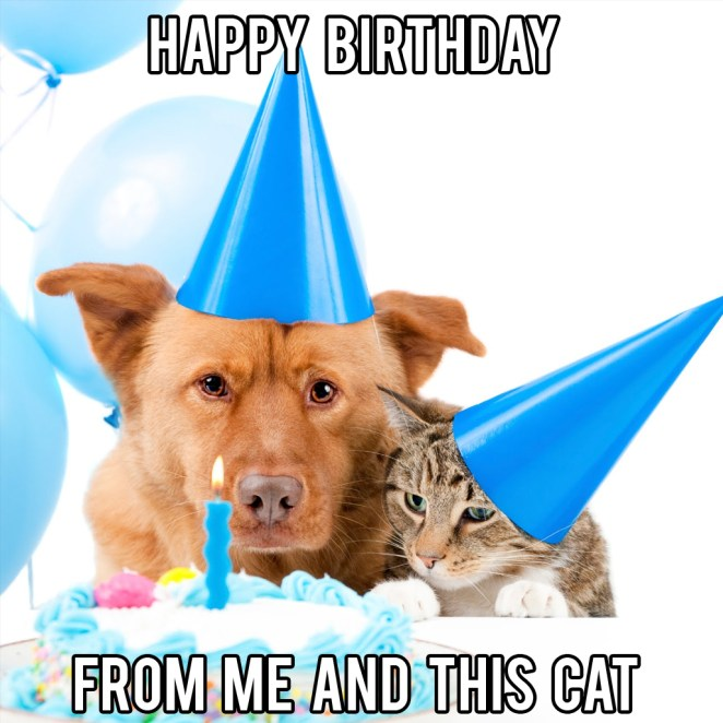 happy birthday cat dog meme