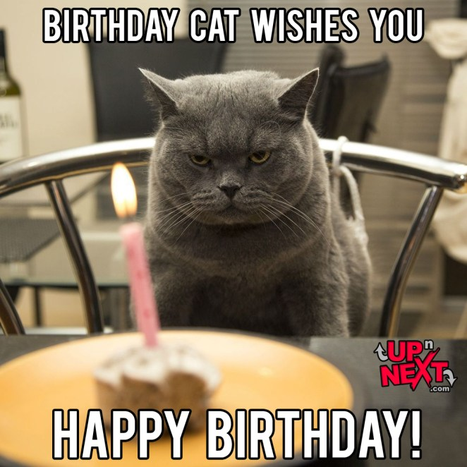 Happy Birthday Meme Cat