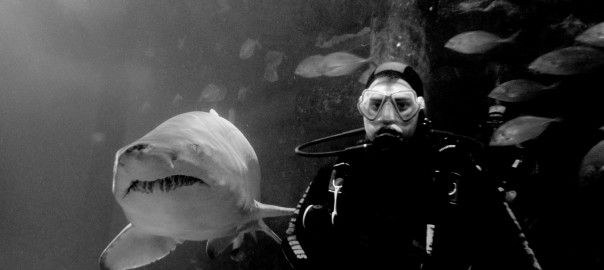Manly Shark Dive