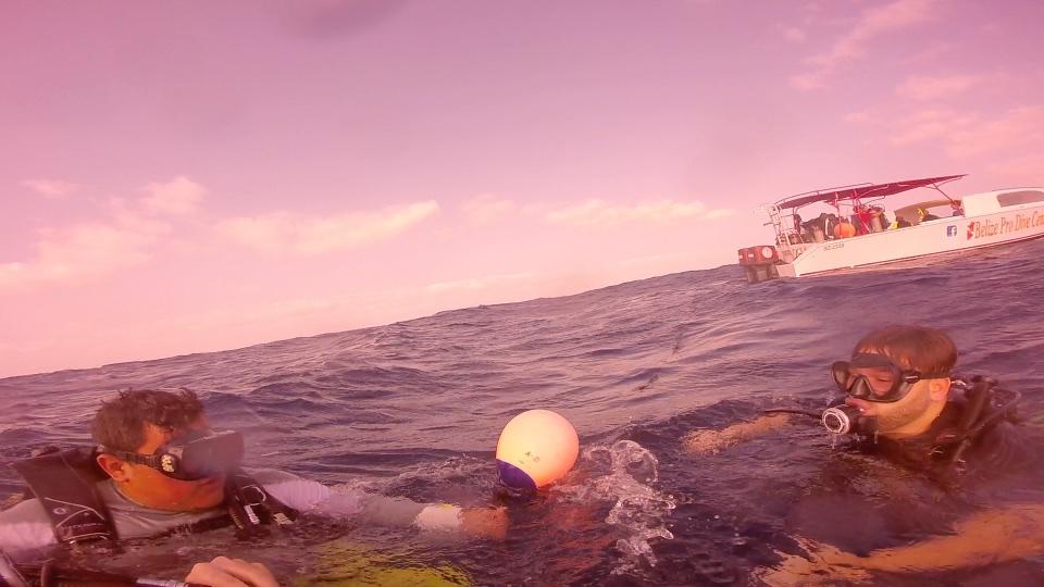 Scuba divers floating in ocean