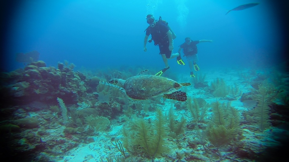 Scuba divers with sea turtle