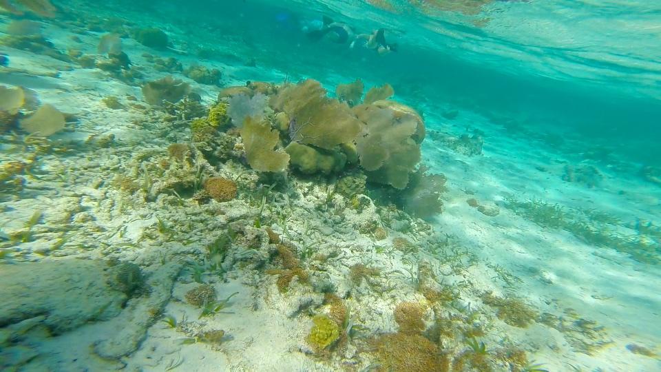 Coral at Hol Chan Marine Reserve