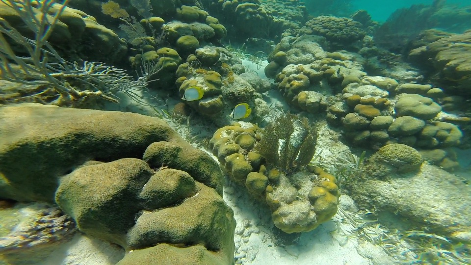 Fish and coral at Hol Chan Marine Reserve