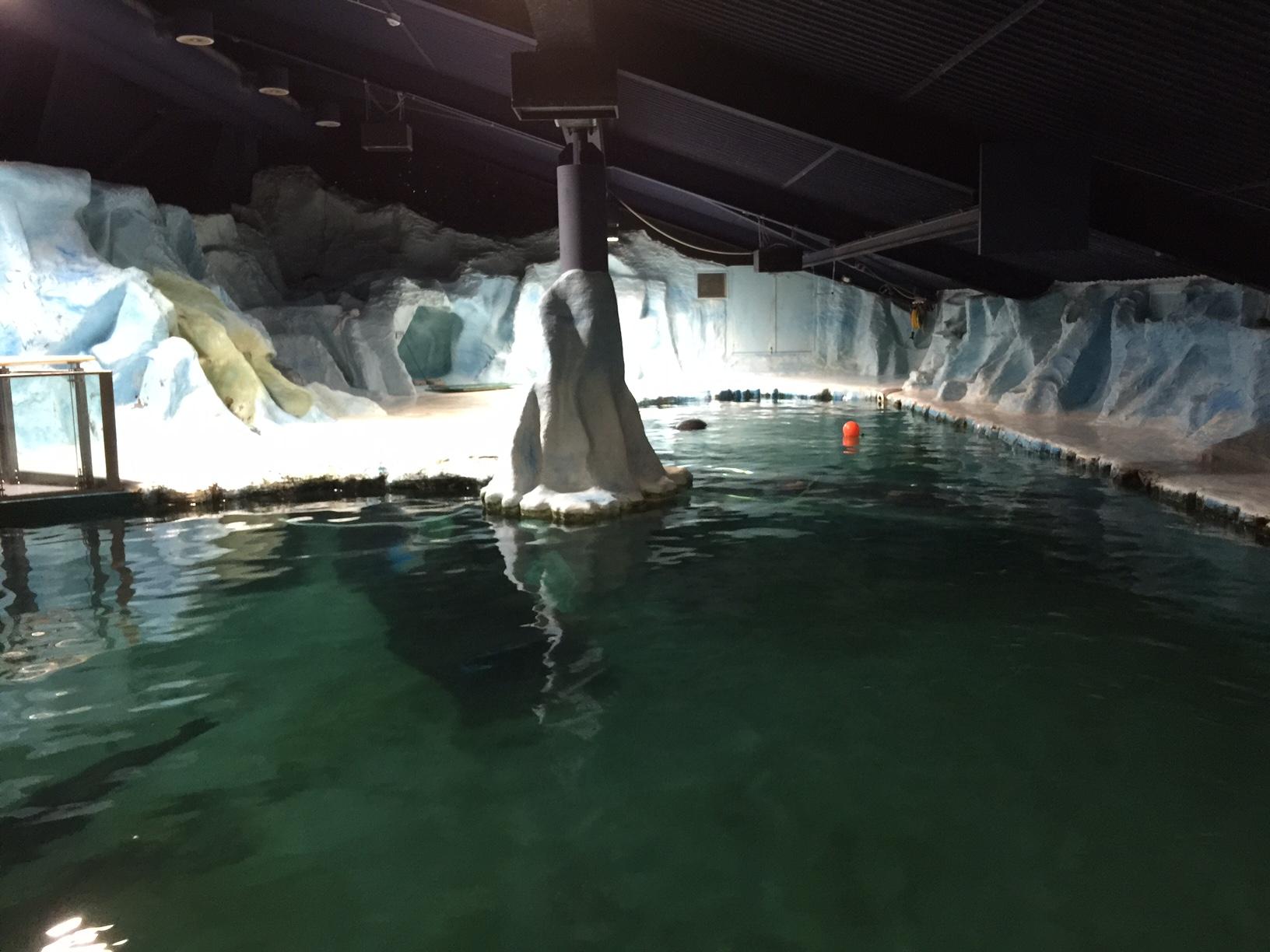 Pool at Polaria Tromso Norway