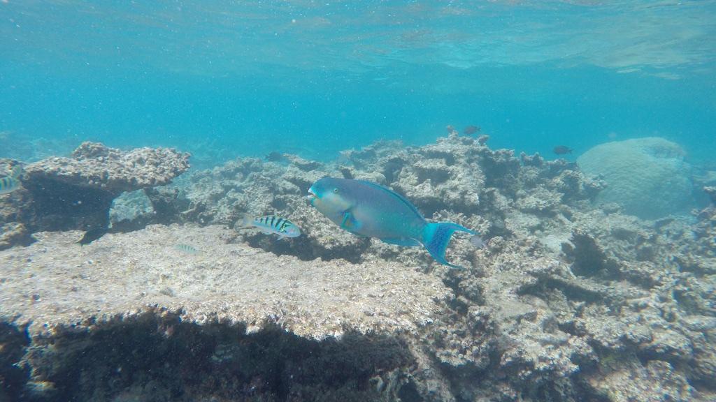 Fish and coral Maldives