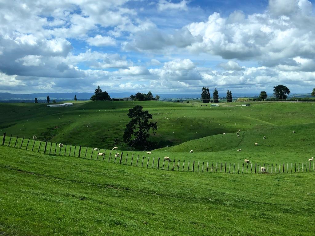 Rolling pastures at Hobbiton Movie Set Tour