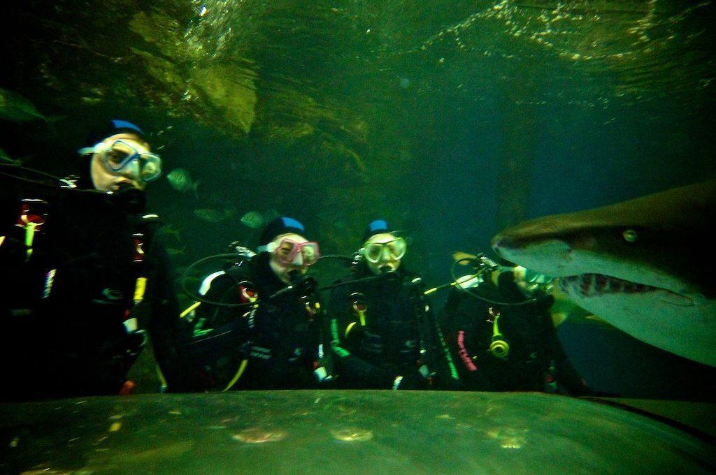 Scuba divers with nurse shark at Manly Sea Life Sanctuary