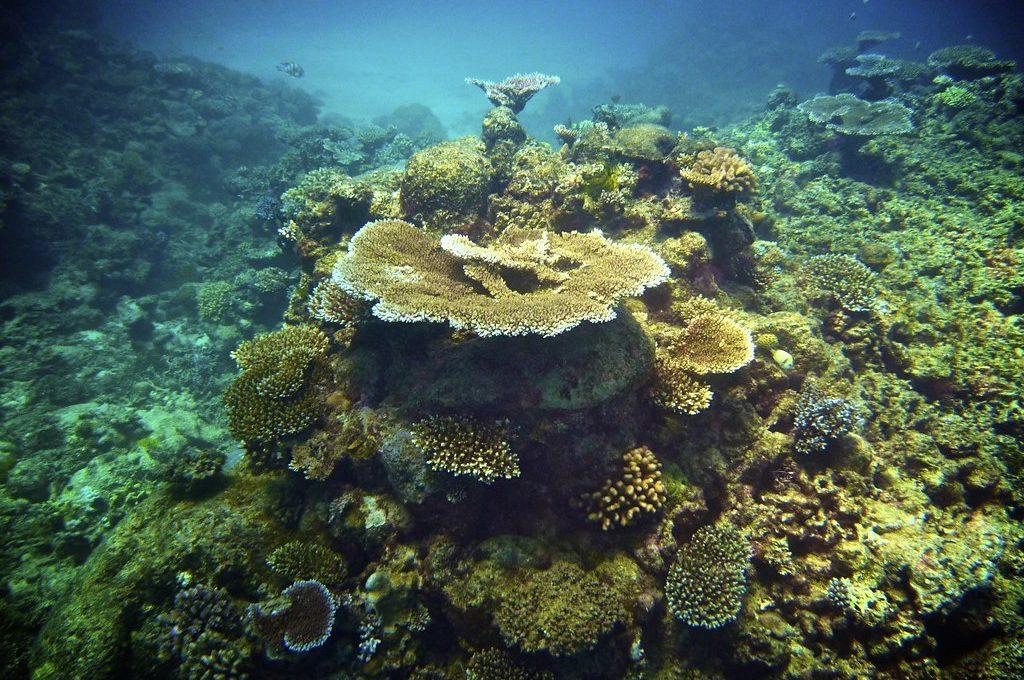 Great Barrier Reef Australia coral