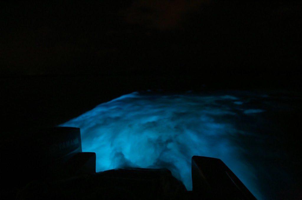 Luminous Lagoon in Jamaica