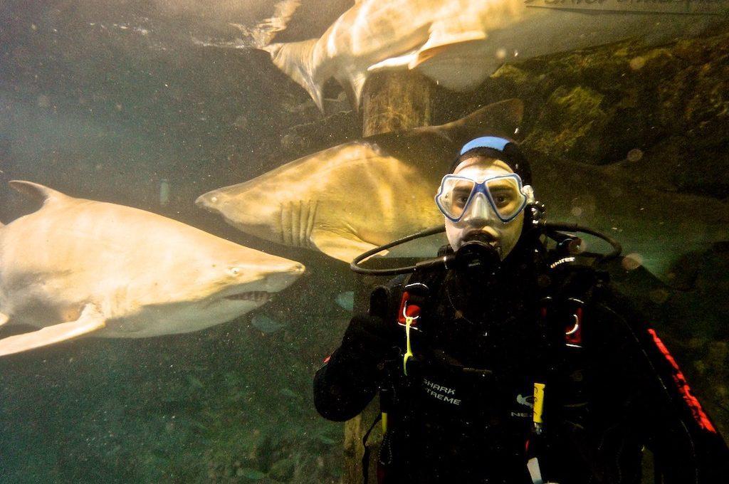Scuba diver with nurse sharks at Manly Sea Life Sanctuary