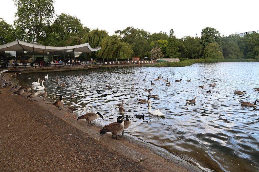 Birds Hyde Park London
