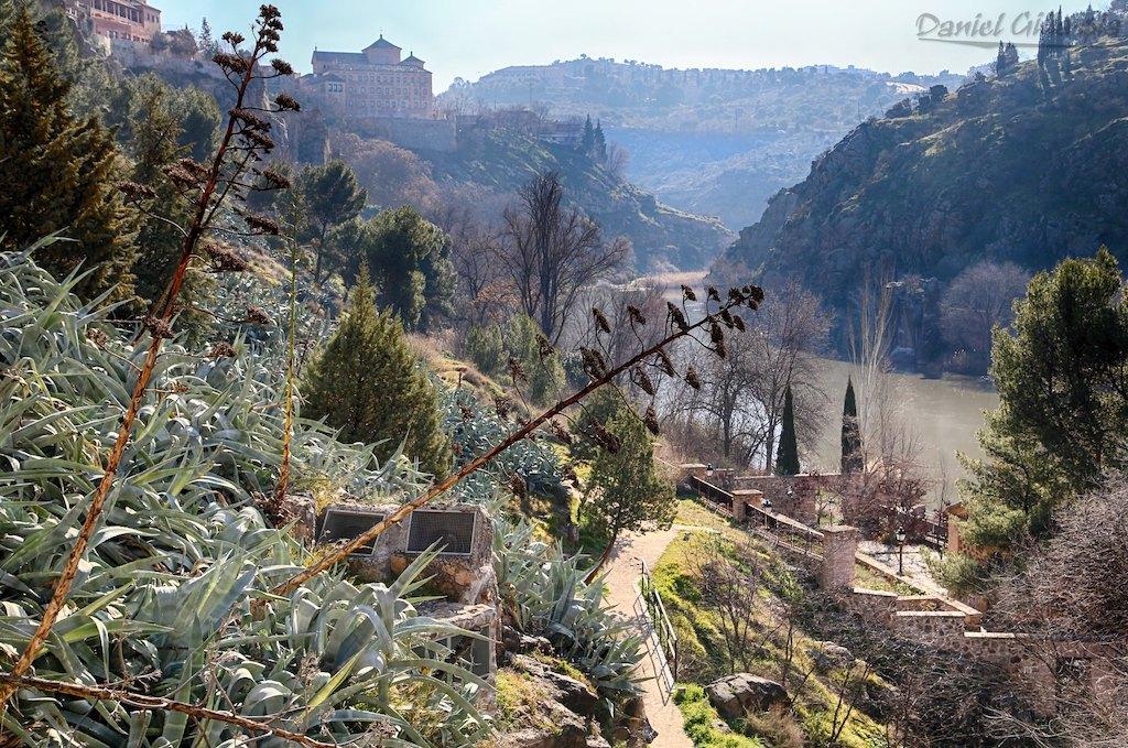 Vegetation Toledo Spain
