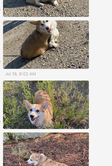 Rover dog photos