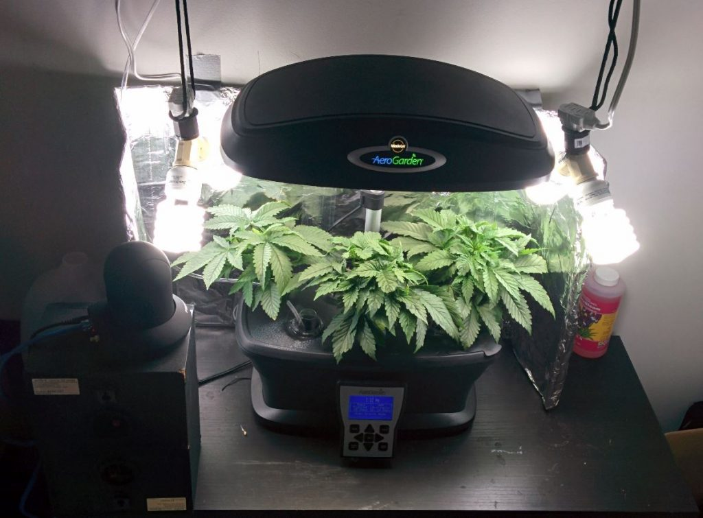 Hydroponic Grow Box Beginners