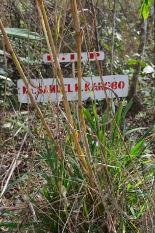Grave in ETU burrial ground, Kailahun