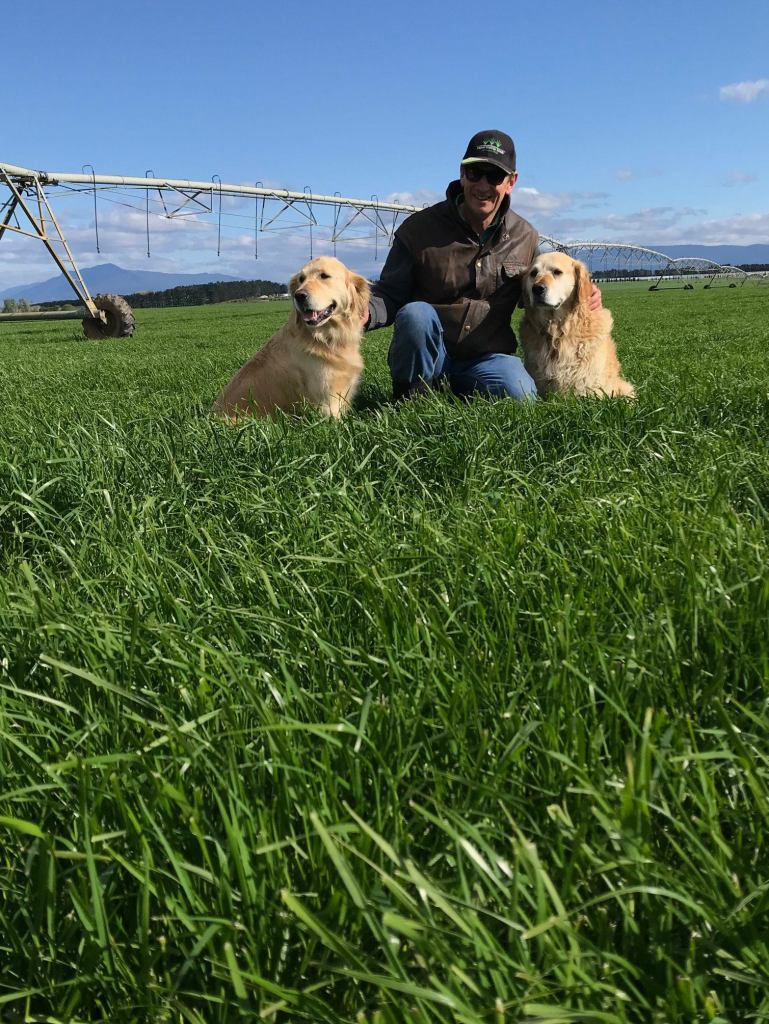 Man with two Golden Retrievers in luscious green grass