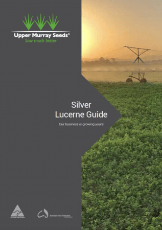 Silver Lucerne Guide