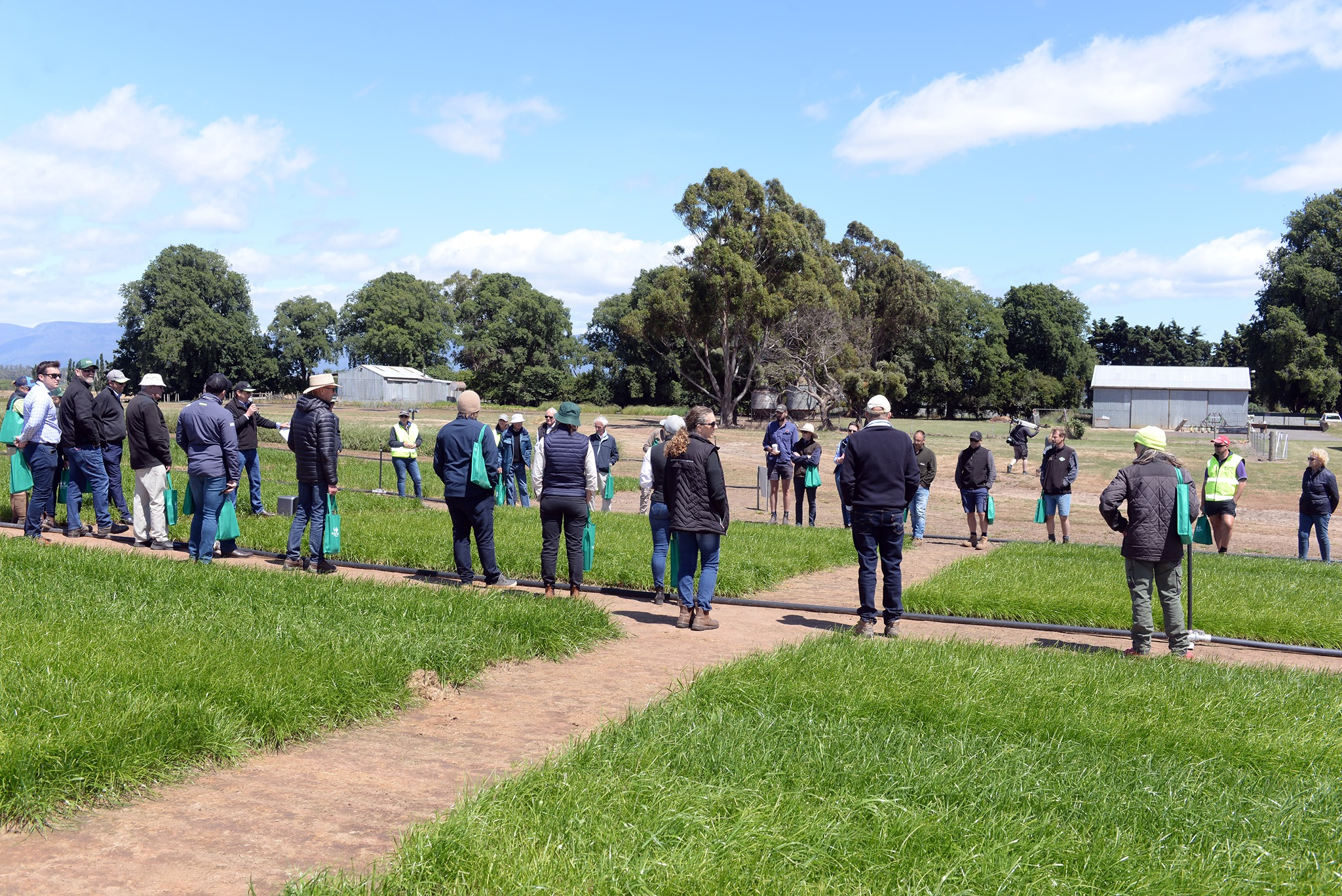 Crowd of people looking at pastures