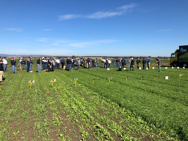 Crowd at Pasture demonstration site