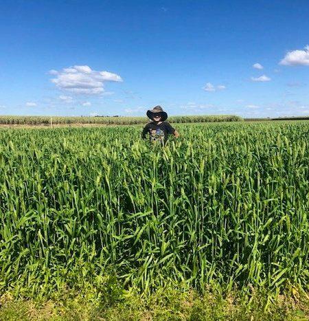 Harpoon barley paddock for queensland farmer