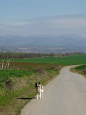 This dog kept its distance, but followed us all the way to Bylazora