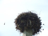 Stork nests are basically like apartment buildings where they live in the penthouse, and all of the other birds live down below