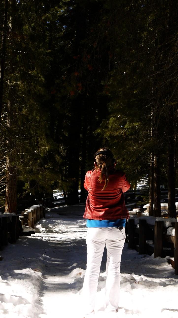 Sequoia Yosemite 155
