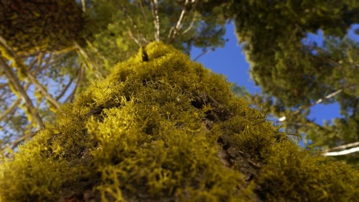 Sequoia Yosemite 221