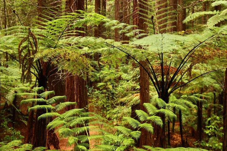 New Zealand Ferns and Californian Redwoods