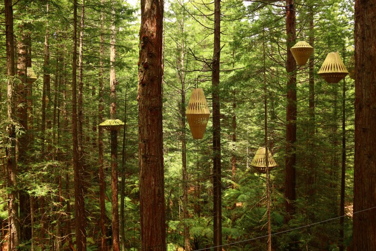 Rotorua's Treewalk lamps, David Trubridge lights by day