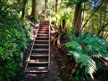 Stairs to help with the hike down through lush vegetation of ferns, beech and podocarp trees, Tongariro Alpine Crossing