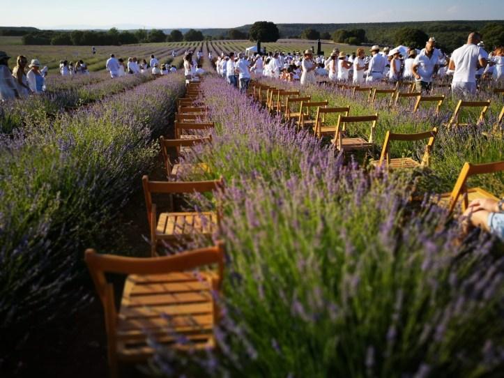Lavender fields of Brihuega in Spain, Festival de la lavanda at sunset