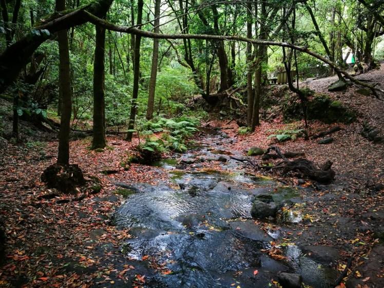 La gomera Garajonay National Park, water stream through laurisilva forest