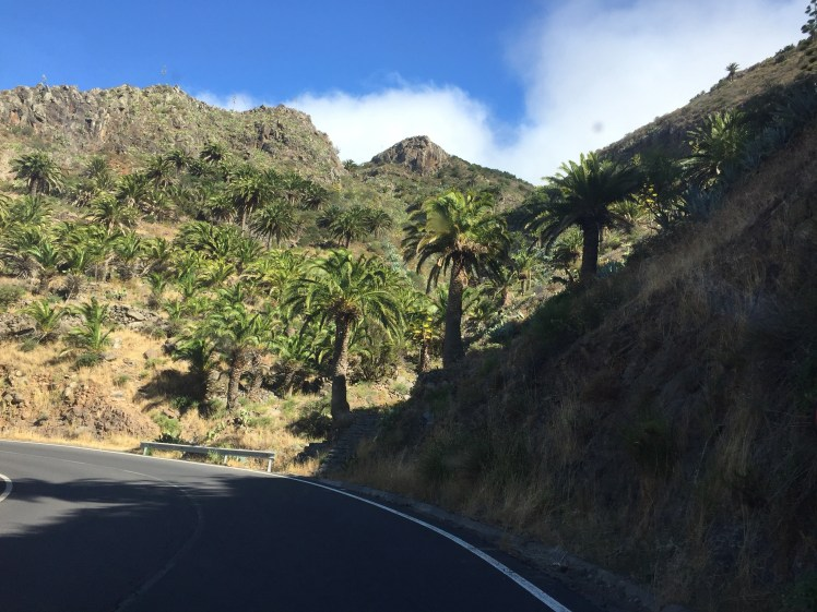 la gomera highway lined by palm trees