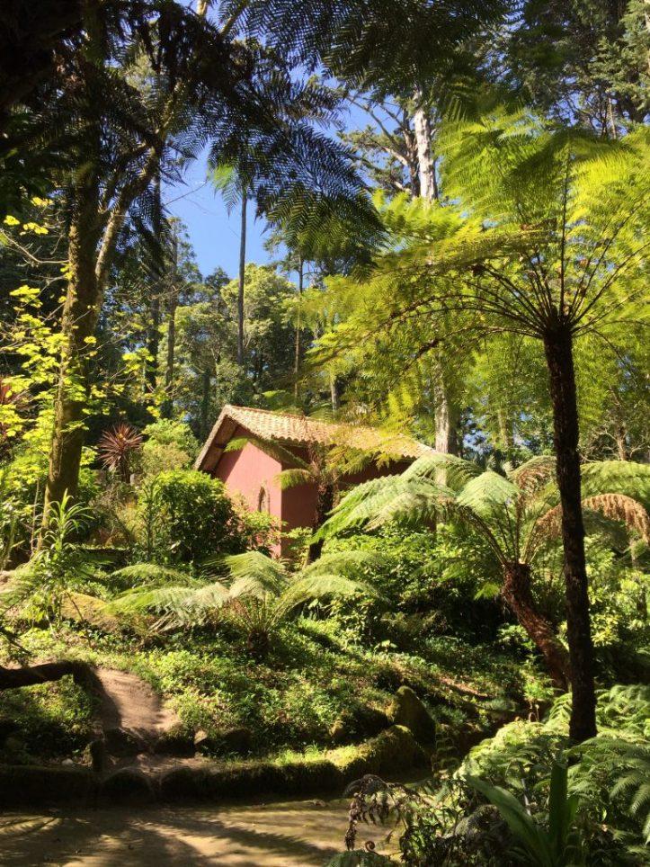 palacio de pena sintra fern garden fern nursery