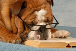 english bulldog wearing eyeglasses sleeping over a good novel