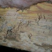 possible-aspergillium-penicillin-and-stachbotrys-found-in-upstate-sc-home-inspection