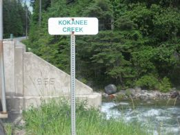 Kokanee Creek Bridge-2014