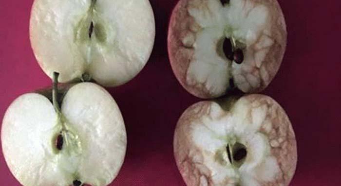 Professora dá lição sobre bullying usando duas maçãs
