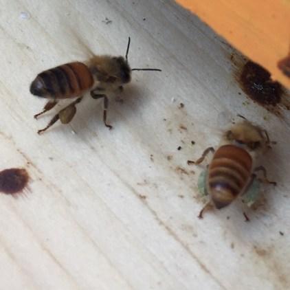 Pollen pants!