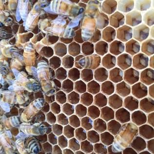 Bee butt!