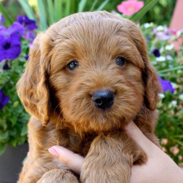Michigan State Dog Breeder - Year of Clean Water