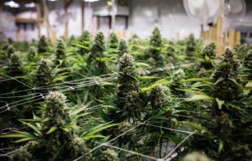 cannabis business loan and financing