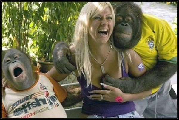 Orangutan grope
