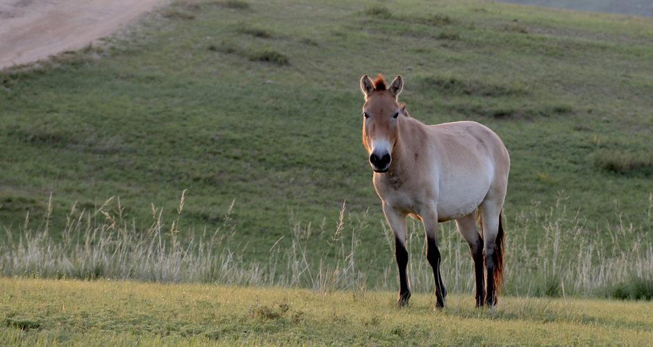 Parc national d'Hustai - incontournables de Mongolie - URALISTAN